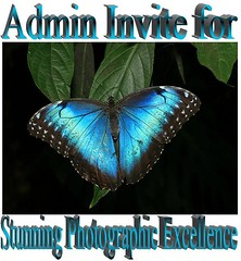 Capturing the Butterfy Beauty Admin Invite