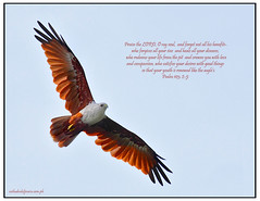 Psalm 103:2-5 (Rey Sta. Ana) Tags: wild heron birds bay philippines ducks rail kites manila birdsinflight subic coron eagles waders waterbirds bif palawan sunbird philippine bestshots ternate mantarey coucals candaba avianphotography philippinebirds reysa bestimages philippinebirdphotography reystaana