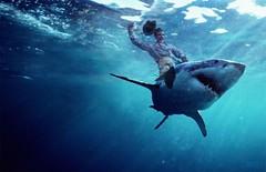 shark_ride