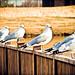 26/365 (Extra): Literary Gulls