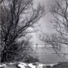 inondation  0471 (domiloui) Tags: winter blackandwhite bw snow black france water flickr hiver monochromatic arbres neige paysage campagne ambiance cooliris nomeny abaucourt