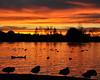 28/365 (Sharon LuVisi) Tags: sunset lake silhouette ducks vannuys lakebalboa fadedblurred3652010 dpssilhouettes