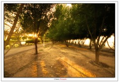 Dancing With The Trees (Damon | Photography) Tags: park trees light 2 sun tree green nature shop photoshop walking landscape photo nikon warm ray with dancing walk wide creative dream sigma suit filter cs dreamy rays kuwait mm sunrays 1020 damon shuwaikh the sigma1020mm d90 nikond90
