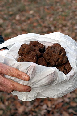bag of truffles