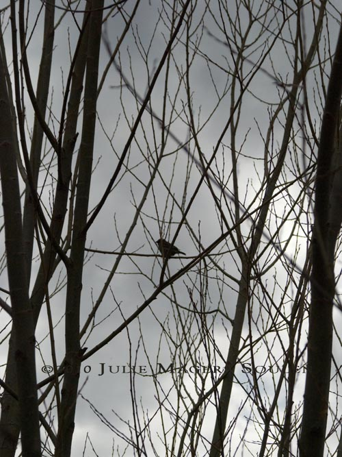 The silhouette of a single small bird perched in the bare branches of a tree is waiting patiently for the arrival of spring.
