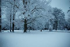 Snow-4850