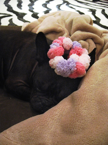 japanese scrunchie french bulldog-color