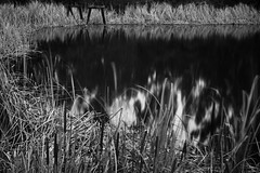 Séance (cah_1) Tags: longexposure blackandwhite reeds contracosta canonef50mmf14usm ndfilter neutraldensity canoneos50d itscalifornia