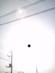 【写真】Backlight (DCC Leica M3)