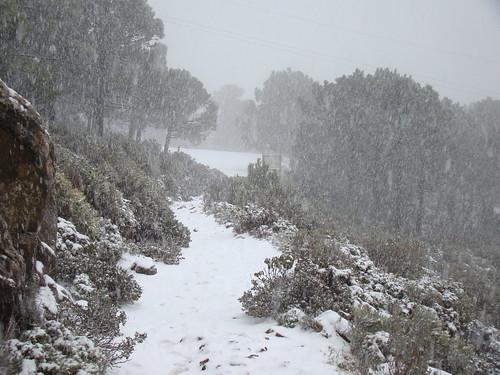 Los Reales Nevado (7)
