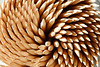 Spiral of toothpicks (Juan Antonio Capó) Tags: wood madera pattern background surface textures toothpicks chopsticks fondo texturas superficie tandenstokers palillos patrón zahnstocher stuzzicadenti mondadientes kürdan tandpetare palitosdedente curedents escuradents tannstönglar зубочистки scobitori 牙签,이쑤시개 οδοντογλυφίδεσ つまようじ、wykałaczki