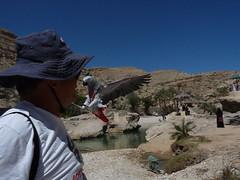 P1190100 (shimmertje) Tags: oman wadi khalid bani