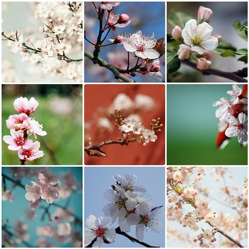 [Things I ♥ Thursday]  Flowering tree blossoms