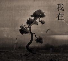 12 univerzalnih istina - univerzalne istine o životu Zen tre