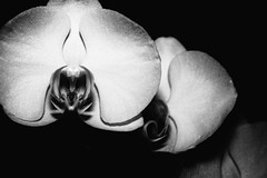Orchidee (Vol.1) (Martin.Matyas) Tags: flowers flower canon blumen canonef50mmf18 blume eos400d