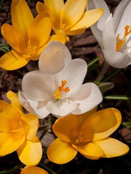 Spring, Spring, Spring is Here!
