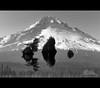 Mount Hood (Jesse Estes) Tags: bw reflection inverted mounthood jesseestesphotography