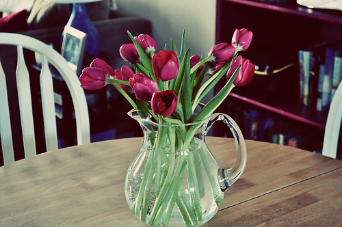 Tulips B