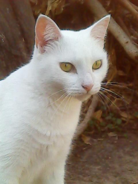 gatita blanca: