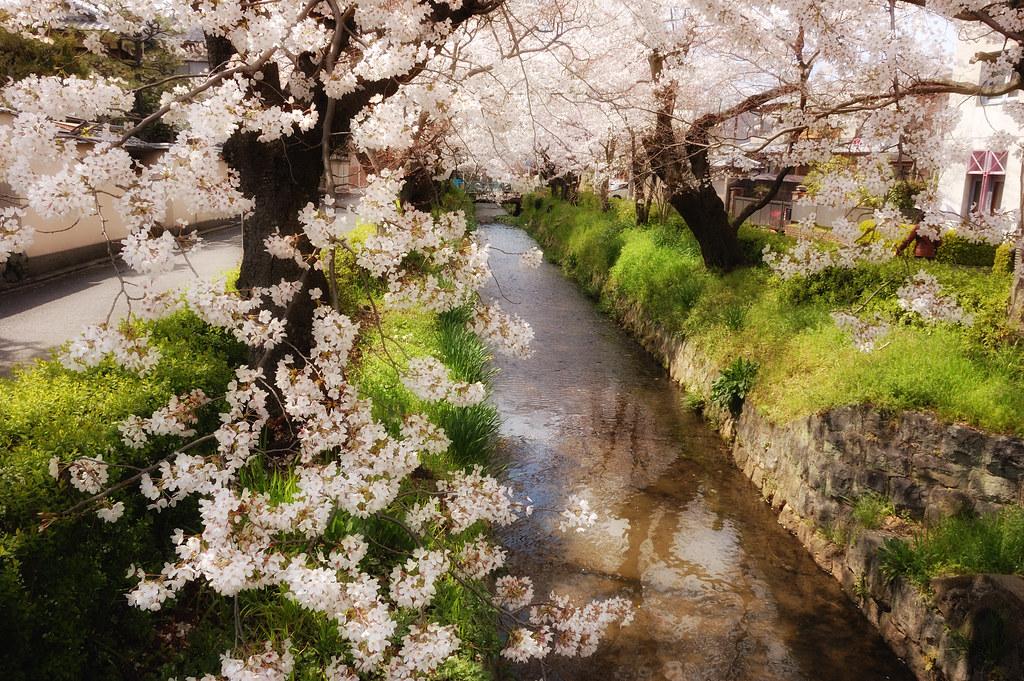 Sakura 2010 #12