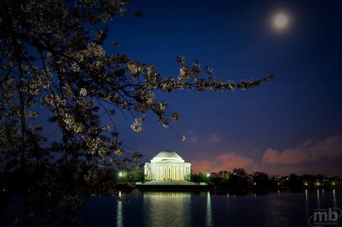 Early Morning Cherry Blossom Photowalk