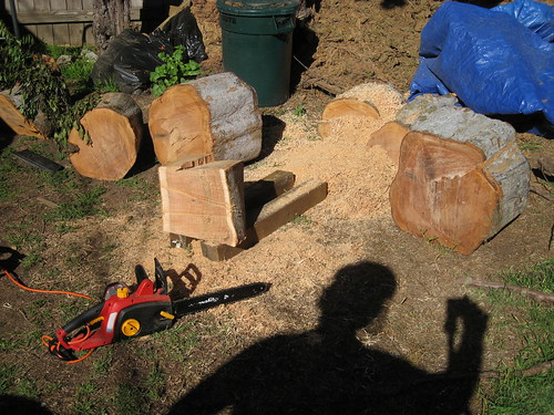 cutting work begins on the Chinese elm logs
