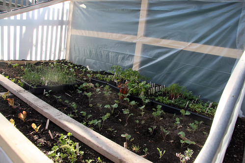 full cold frame 065