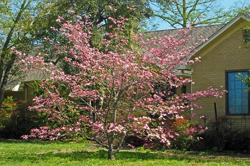 Spring In Mena 23