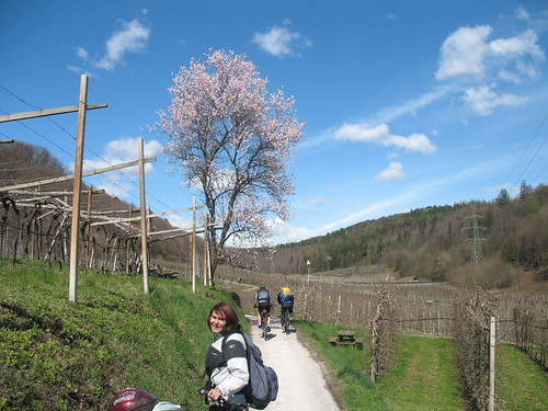Der Radweg führt leicht abfallend durch das frühlingshafte Lavasontal zum Kalterer See
