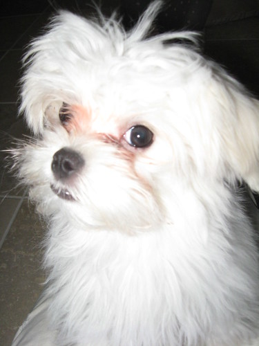 Casper is just adorable!!