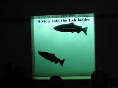 fish_ladder