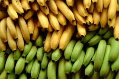 Bananas by Ian Ransley