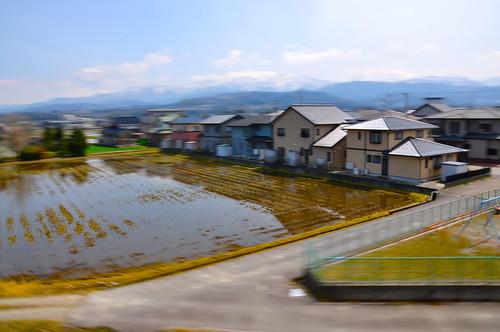 Arroz inundado