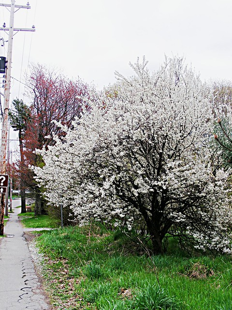 #88 - Tree