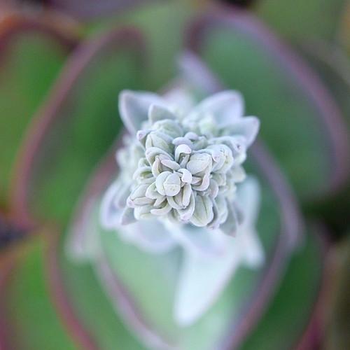 Macro Flower 11
