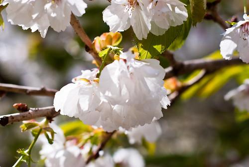 030510_ Blossom #3