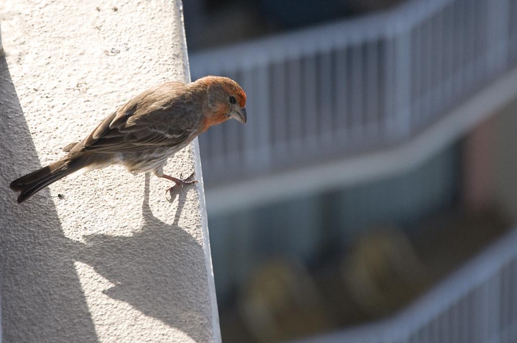 don't jump birdy