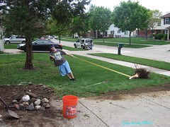 Pulling out the tree stump 003