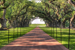 River road leading from Oak Alley Plantation