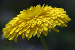Happy Birthday Dear Irene (Weirena) (itala2007) Tags: flores flower nature itala2007 weirena saariysqualitypictures worldsartgallery