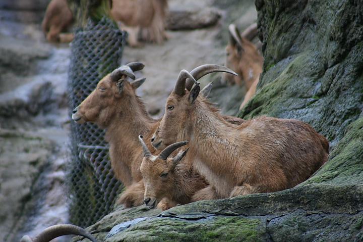 台北木柵動物園0056