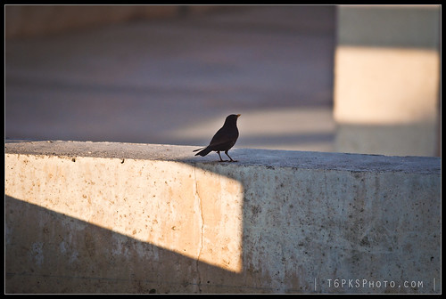 Bird on concrete
