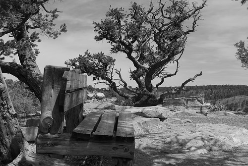 Bench & tree