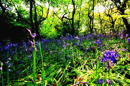 woods_004