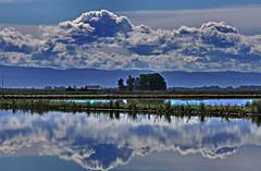 California rice fields (champbass2) Tags: california blue sky tractor reflection nature water northerncalifornia clouds rice farm planting flooded buttecounty seeding ricefarming champbass3