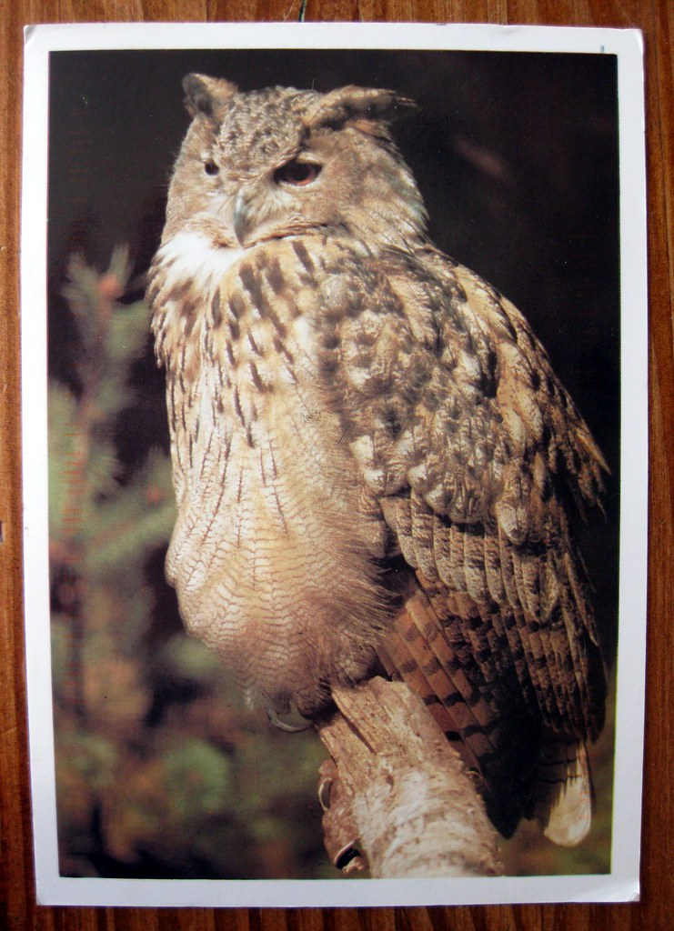 Owl postcard from the Philippines