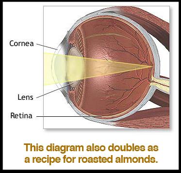 lens-cornea-retina-diagram