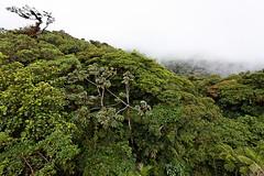 baudchon-baluchon-costa-rica-santa-elena-27