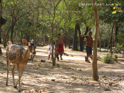 A spotted deer spotted in children's park