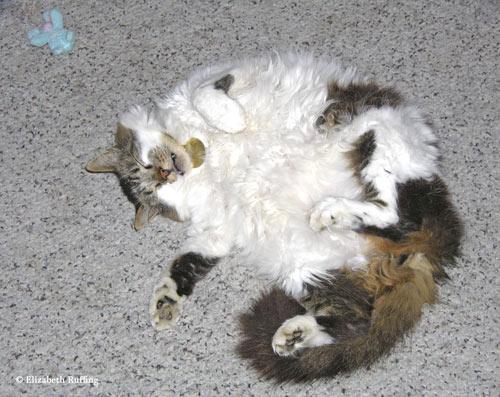 Kitty relaxing